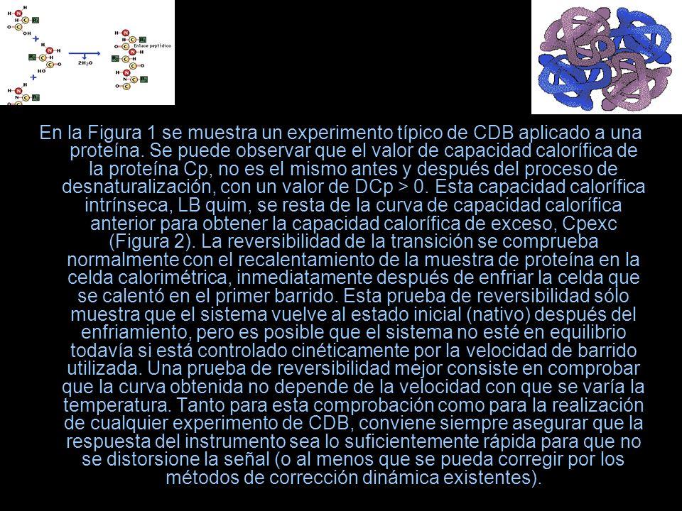En la Figura 1 se muestra un experimento típico de CDB aplicado a una proteína. Se puede observar que el valor de capacidad calorífica de la proteína