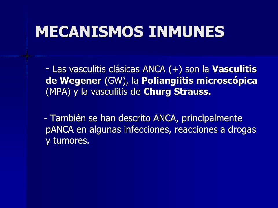 MECANISMOS INMUNES - Las vasculitis clásicas ANCA (+) son la Vasculitis de Wegener (GW), la Poliangiitis microscópica (MPA) y la vasculitis de Churg S