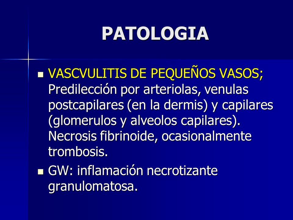 PATOLOGIA VASCVULITIS DE PEQUEÑOS VASOS; Predilección por arteriolas, venulas postcapilares (en la dermis) y capilares (glomerulos y alveolos capilare