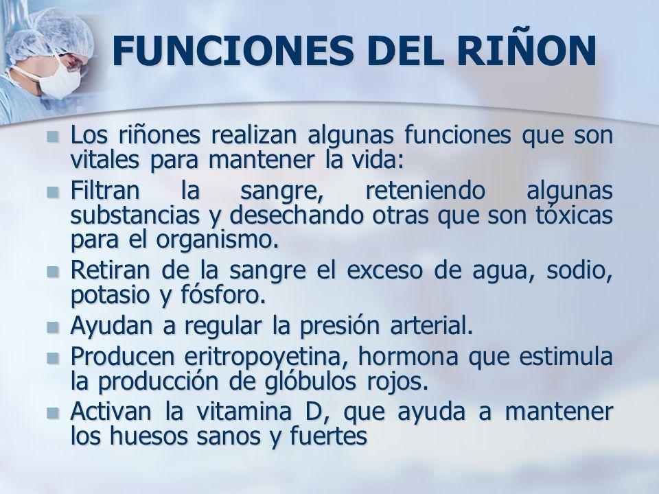 FUNCIONES DEL RIÑON Los riñones realizan algunas funciones que son vitales para mantener la vida: Los riñones realizan algunas funciones que son vital