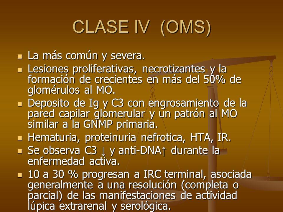 CLASE IV (OMS) La más común y severa. La más común y severa. Lesiones proliferativas, necrotizantes y la formación de crecientes en más del 50% de glo