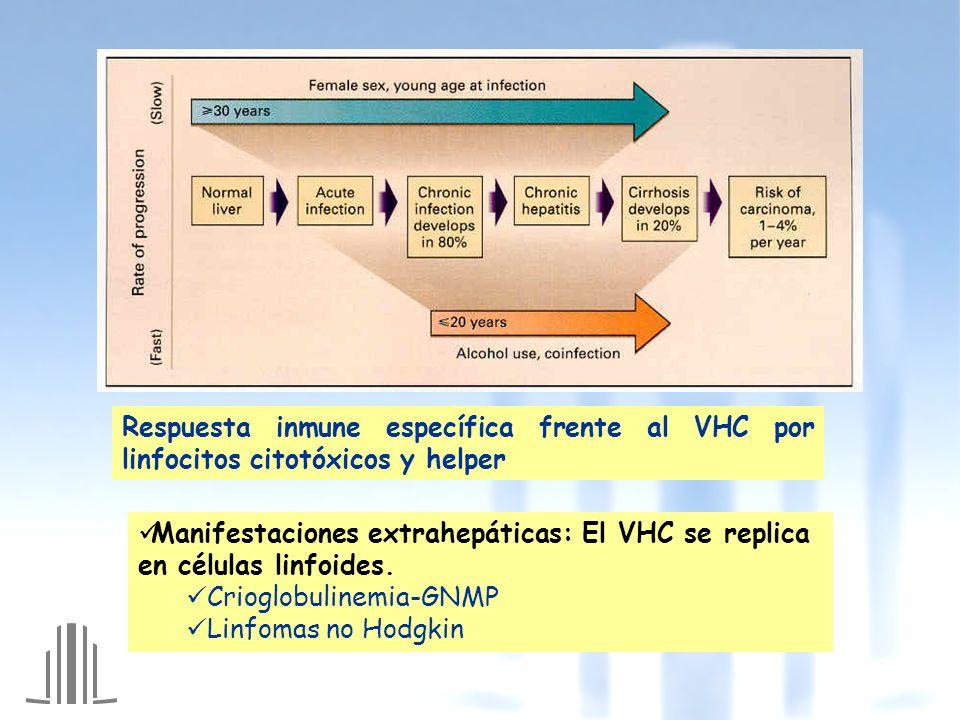 Respuesta inmune específica frente al VHC por linfocitos citotóxicos y helper Manifestaciones extrahepáticas: El VHC se replica en células linfoides.