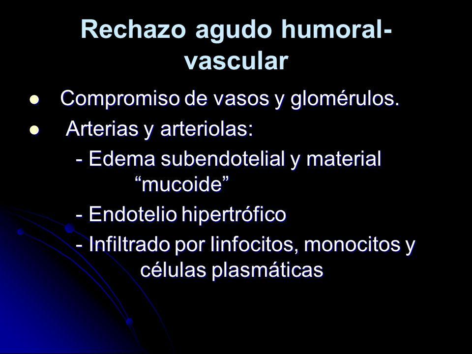 Rechazo agudo humoral- vascular Compromiso de vasos y glomérulos. Compromiso de vasos y glomérulos. Arterias y arteriolas: Arterias y arteriolas: - Ed