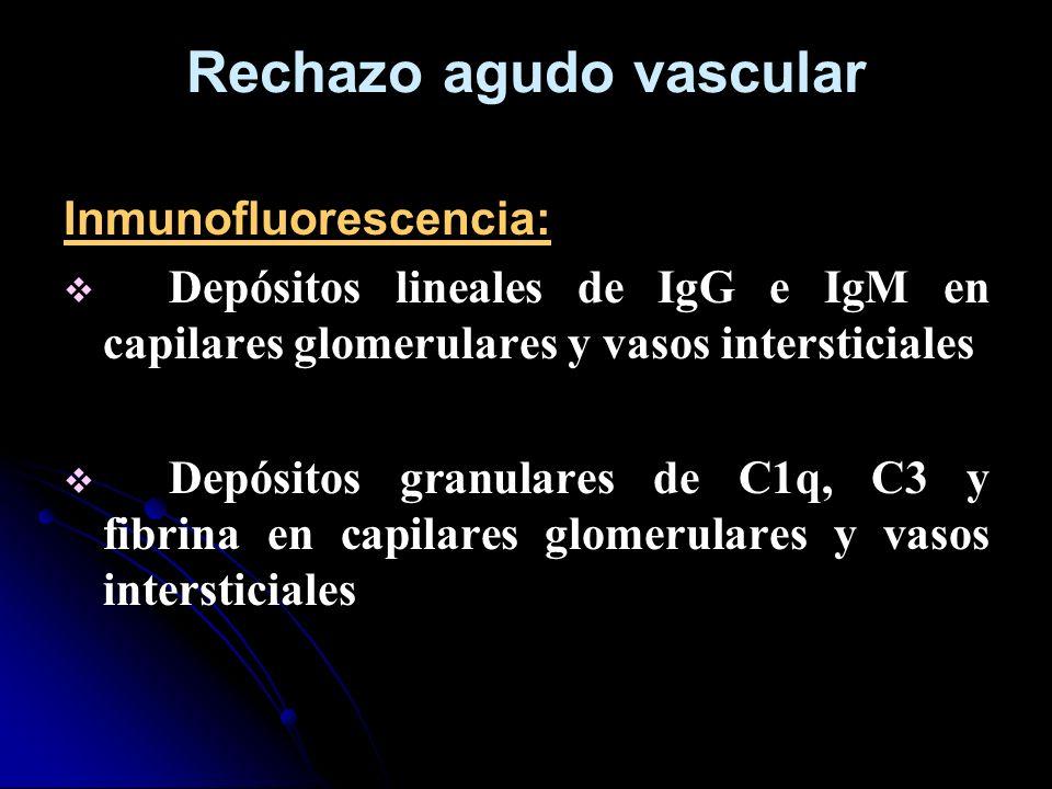 Rechazo agudo vascular Inmunofluorescencia: Depósitos lineales de IgG e IgM en capilares glomerulares y vasos intersticiales Depósitos granulares de C