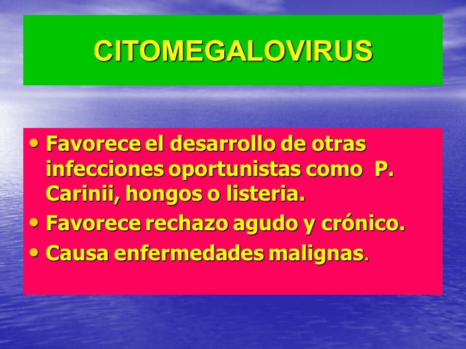 CITOMEGALOVIRUS Favorece el desarrollo de otras infecciones oportunistas como P. Carinii, hongos o listeria. Favorece el desarrollo de otras infeccion
