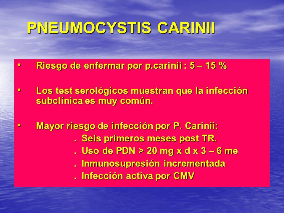 PNEUMOCYSTIS CARINII Riesgo de enfermar por p.carinii : 5 – 15 % Riesgo de enfermar por p.carinii : 5 – 15 % Los test serológicos muestran que la infe