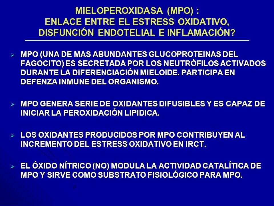 MIELOPEROXIDASA (MPO) : ENLACE ENTRE EL ESTRESS OXIDATIVO, DISFUNCIÓN ENDOTELIAL E INFLAMACIÓN? MPO (UNA DE MAS ABUNDANTES GLUCOPROTEINAS DEL FAGOCITO