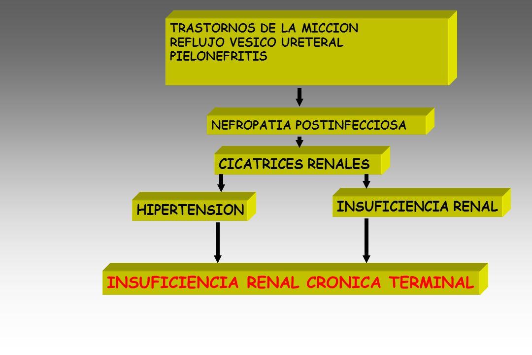 TRASTORNOS DE LA MICCION REFLUJO VESICO URETERAL PIELONEFRITIS NEFROPATIA POSTINFECCIOSA CICATRICES RENALES HIPERTENSION INSUFICIENCIA RENAL INSUFICIE