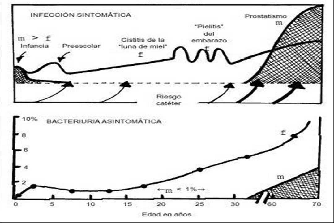PREVALENCIA DE INFECCION URINARIA EN NIÑOS DE 0 A 5 AÑOS.