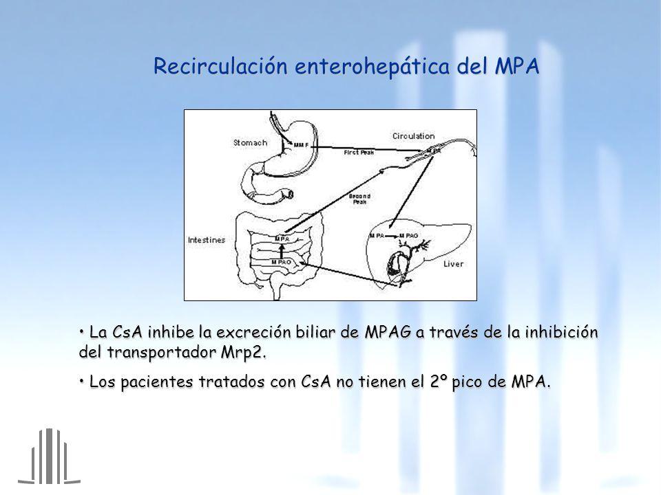 Recirculación enterohepática del MPA La CsA inhibe la excreción biliar de MPAG a través de la inhibición del transportador Mrp2.