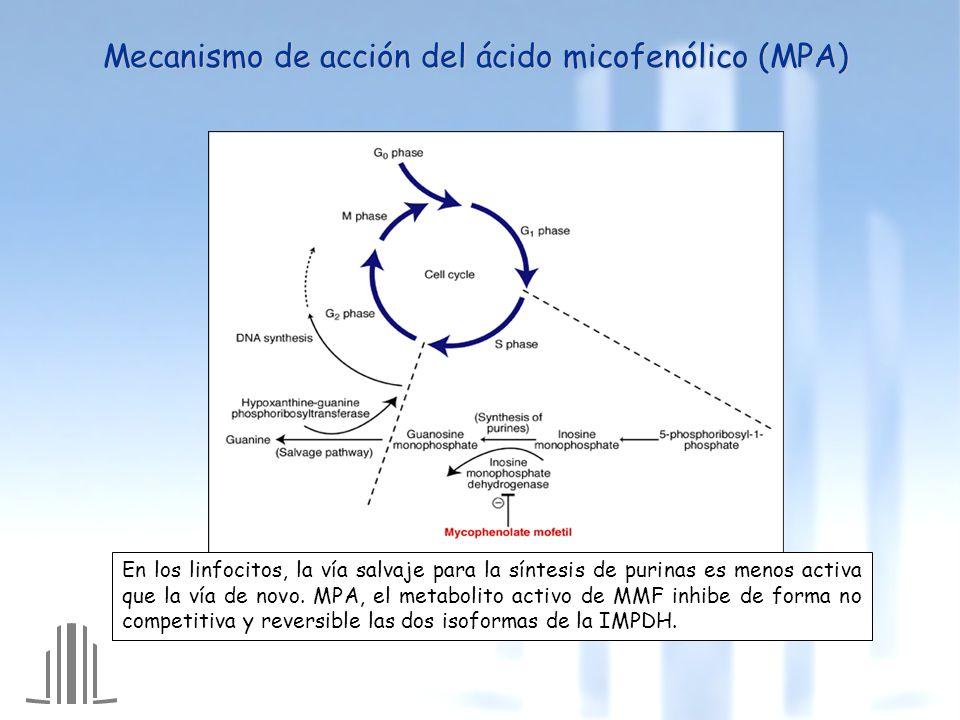Administración de 20 mg MMF/kg en ratas Mpr2 -/- Administración de 20 mg MMF/kg en ratas Mpr2 -/- Hesselink et al, AJT 2005