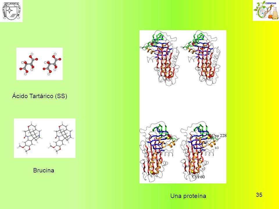 35 Ácido Tartárico (SS) Brucina Una proteína