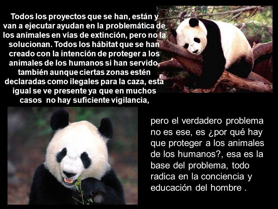 Todos los proyectos que se han, están y van a ejecutar ayudan en la problemática de los animales en vías de extinción, pero no la solucionan. Todos lo