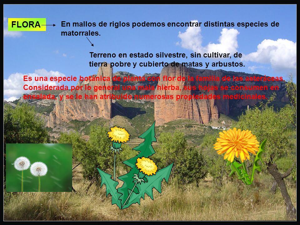 FLORA Terreno en estado silvestre, sin cultivar, de tierra pobre y cubierto de matas y arbustos.