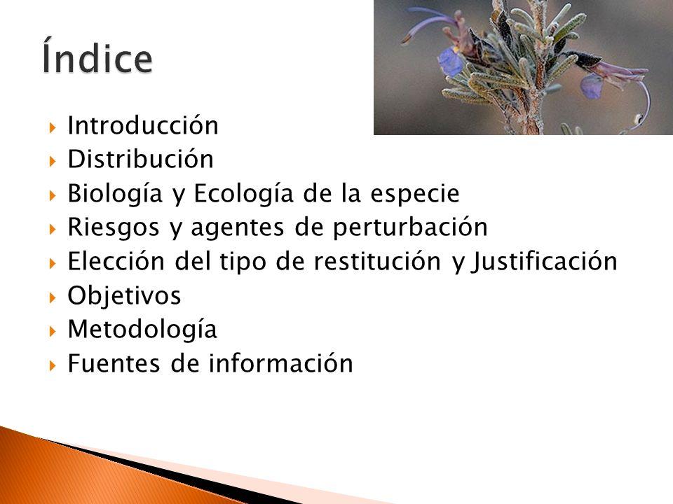 Rosuá, J.L.,1981.Anales Jardín Botánico de Madrid 37 (2): 587-595 Cabezudo et al, 2004.
