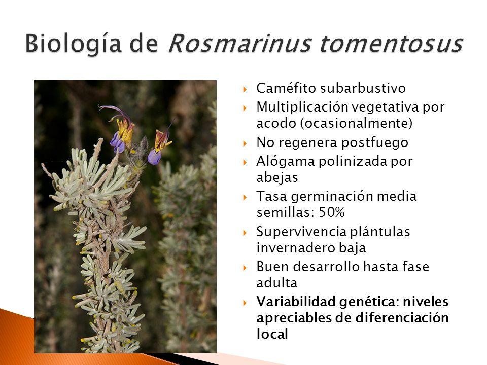 Acantilados y roquedos marinos (dolomías y mármoles) expuestos y de interior Especies acompañantes: Asteriscus marítimus, Rosmarinus officinalis, Maytenus senegalensis subsp.