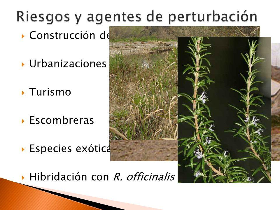 Refuerzo de las poblaciones de Almuñécar (Punta la Mona) y Nerja (Río Chíllar) Justificación: Existencia de poblaciones en peligro y con escaso número de individuos