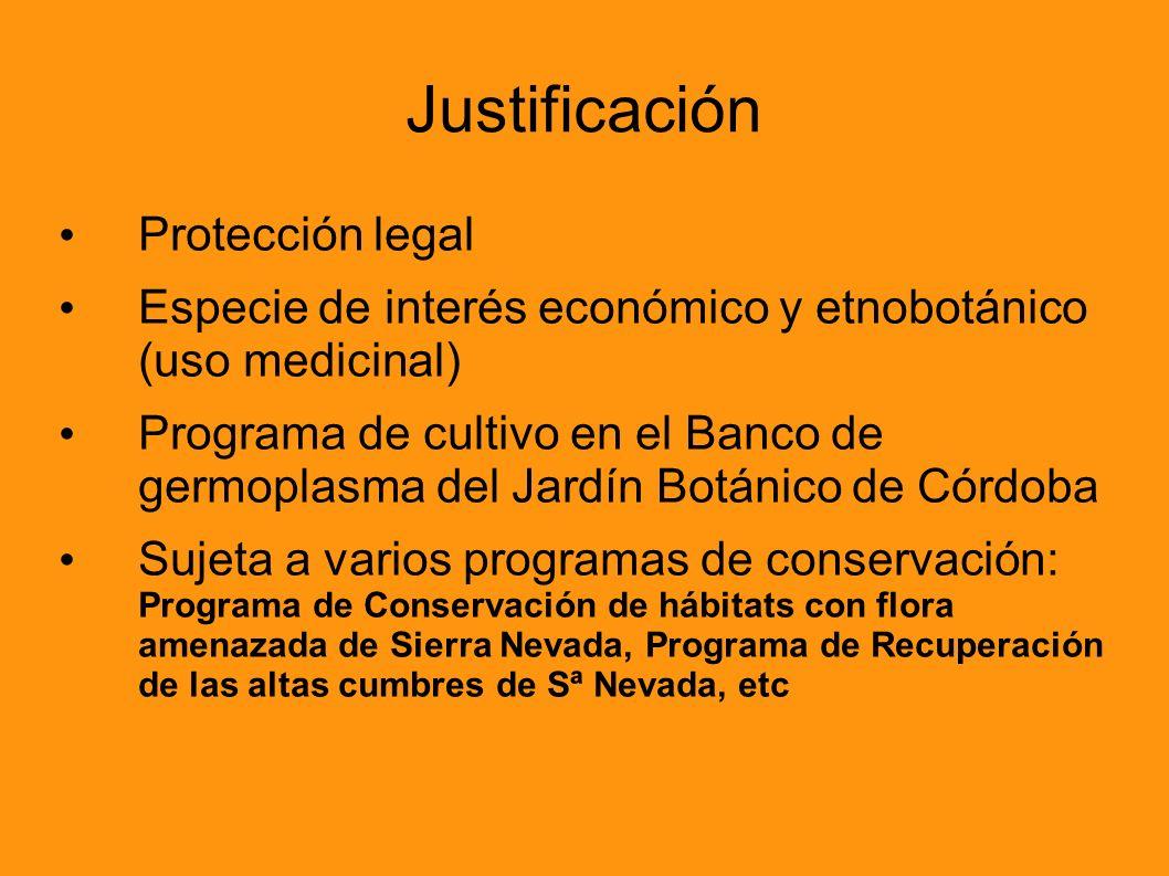 Justificación Protección legal Especie de interés económico y etnobotánico (uso medicinal) Programa de cultivo en el Banco de germoplasma del Jardín B