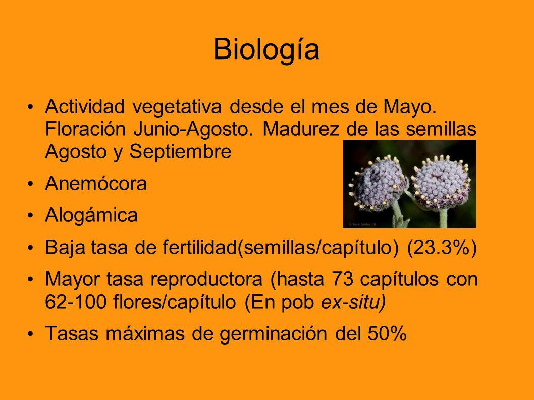 Biología Actividad vegetativa desde el mes de Mayo. Floración Junio-Agosto. Madurez de las semillas Agosto y Septiembre Anemócora Alogámica Baja tasa