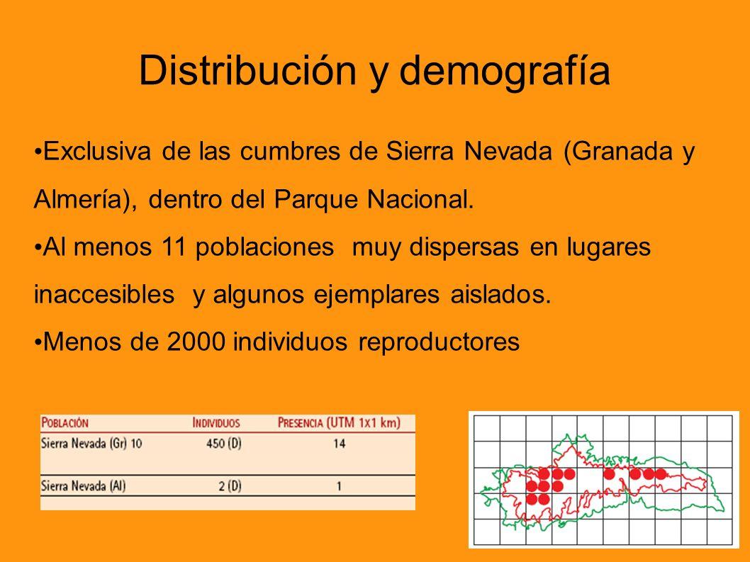 Exclusiva de las cumbres de Sierra Nevada (Granada y Almería), dentro del Parque Nacional. Al menos 11 poblaciones muy dispersas en lugares inaccesibl