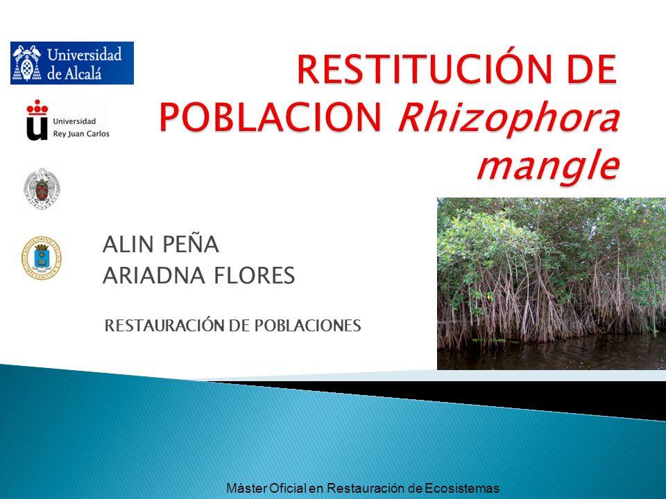ALIN PEÑA ARIADNA FLORES RESTAURACIÓN DE POBLACIONES Máster Oficial en Restauración de Ecosistemas