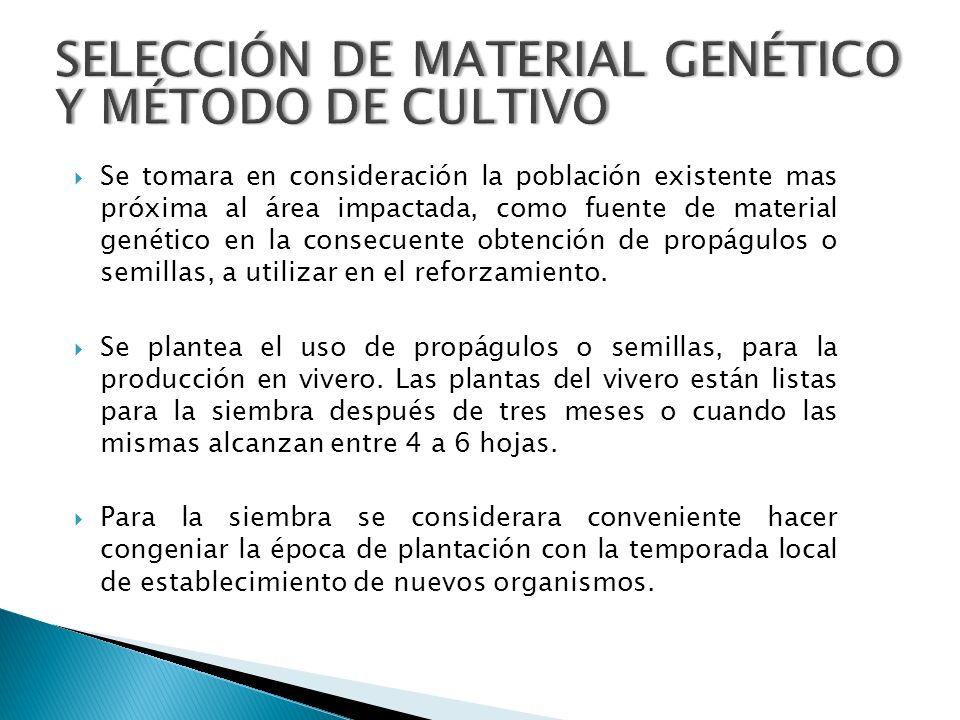 SELECCIÓN DE MATERIAL GENÉTICO Y MÉTODO DE CULTIVO Se tomara en consideración la población existente mas próxima al área impactada, como fuente de mat