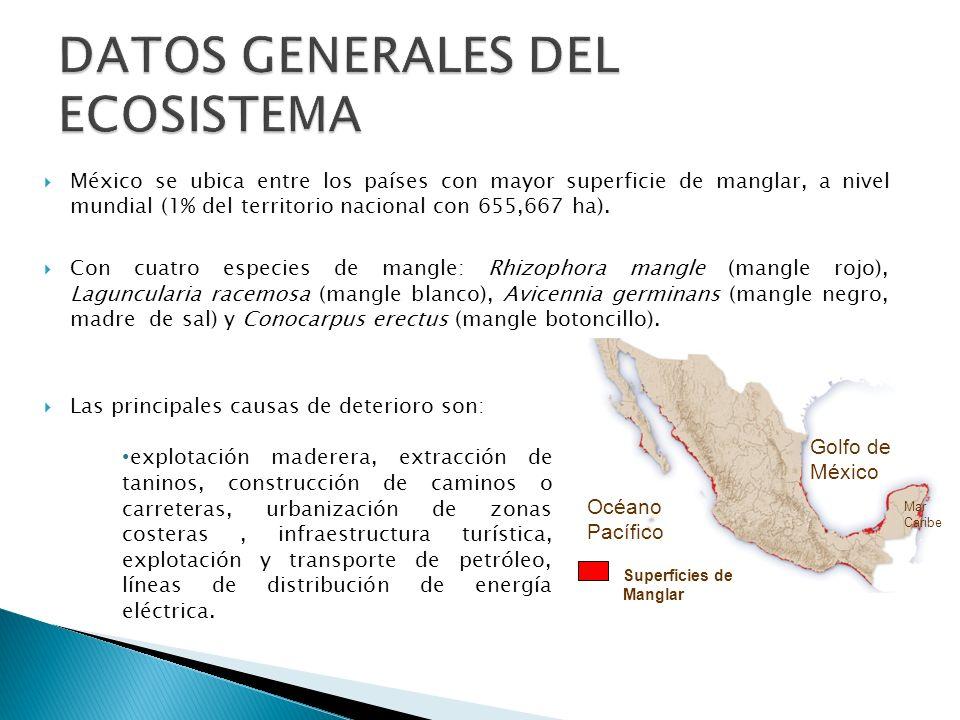 México se ubica entre los países con mayor superficie de manglar, a nivel mundial (1% del territorio nacional con 655,667 ha). Con cuatro especies de