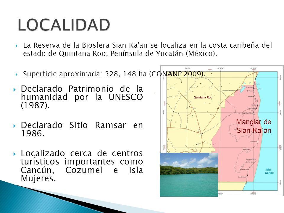 Manglar de Sian Ka´an Declarado Patrimonio de la humanidad por la UNESCO (1987). Declarado Sitio Ramsar en 1986. Localizado cerca de centros turístico