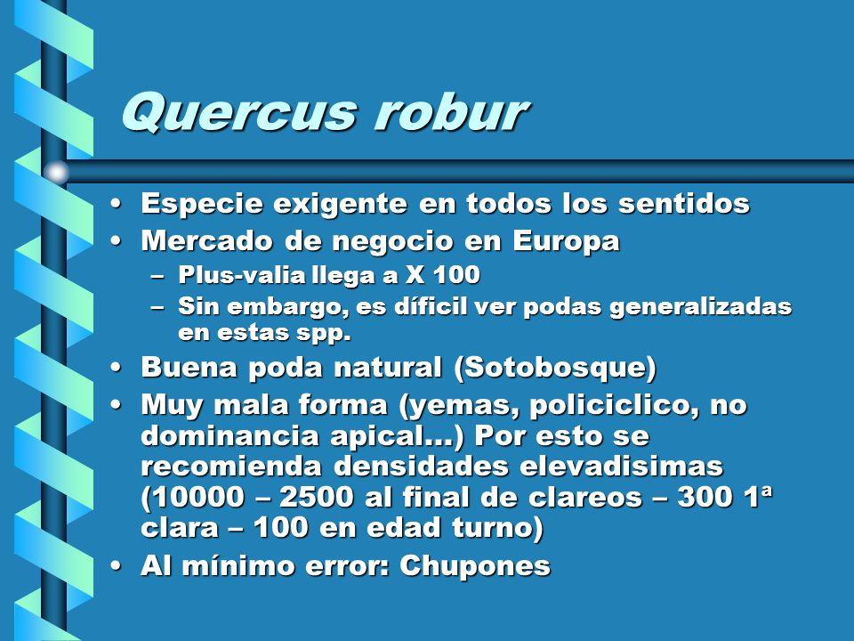 Quercus robur Especie exigente en todos los sentidosEspecie exigente en todos los sentidos Mercado de negocio en EuropaMercado de negocio en Europa –Plus-valia llega a X 100 –Sin embargo, es díficil ver podas generalizadas en estas spp.
