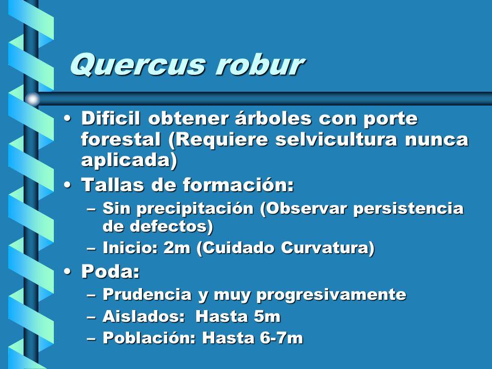 Populus spp Clones de gran profusión de chupones:Clones de gran profusión de chupones: –La poda resulta a menudo inutil –Realizar tallas de formación preventivas por encima del punto de poda.