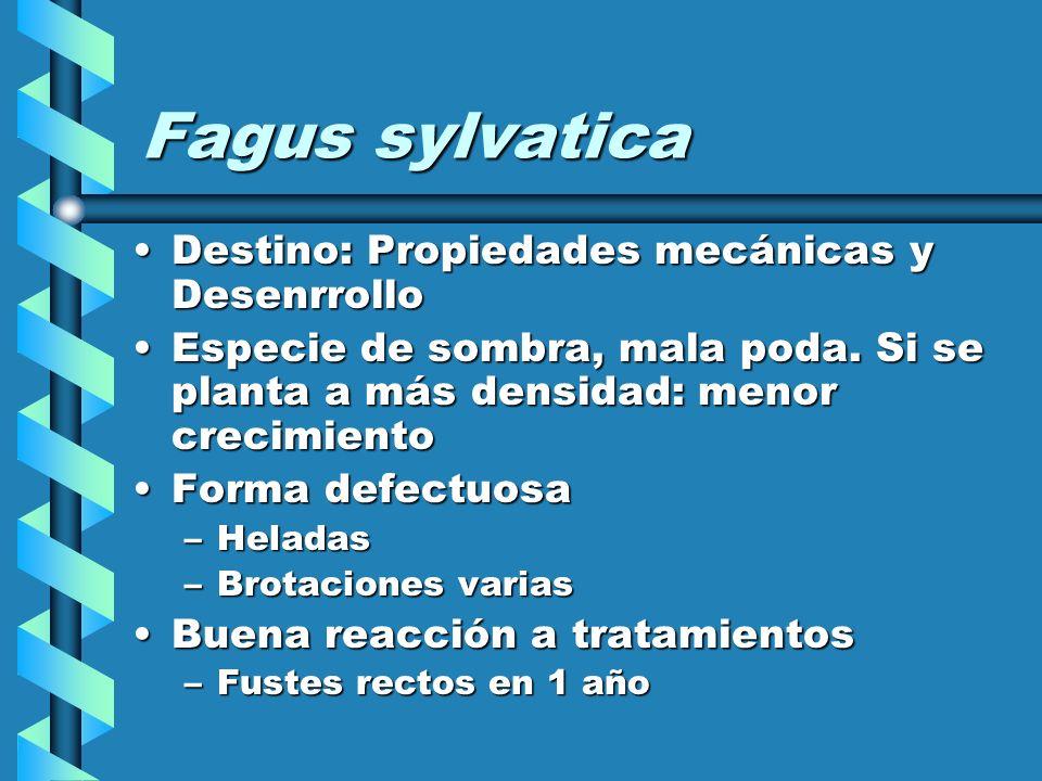 Fagus sylvatica Destino: Propiedades mecánicas y DesenrrolloDestino: Propiedades mecánicas y Desenrrollo Especie de sombra, mala poda.