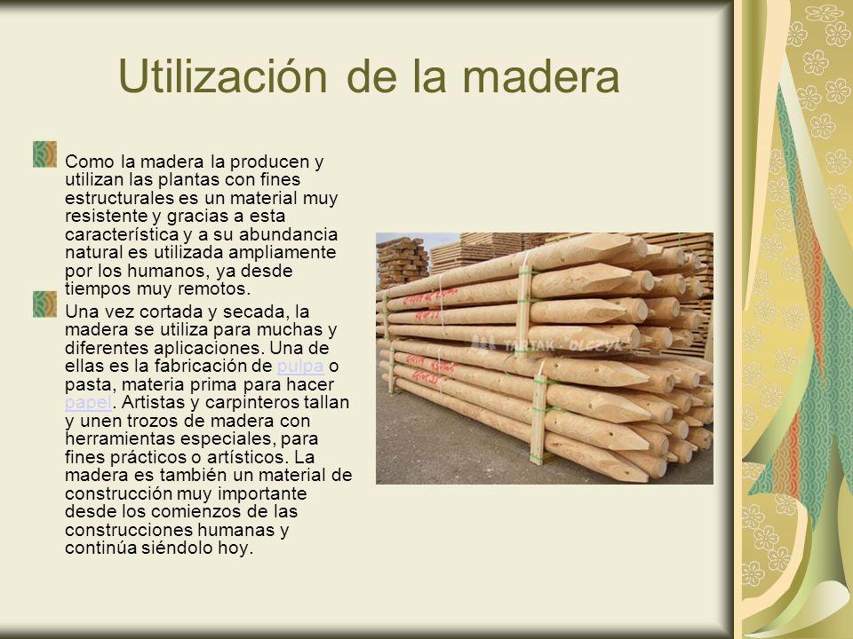 Utilización de la madera Como la madera la producen y utilizan las plantas con fines estructurales es un material muy resistente y gracias a esta característica y a su abundancia natural es utilizada ampliamente por los humanos, ya desde tiempos muy remotos.