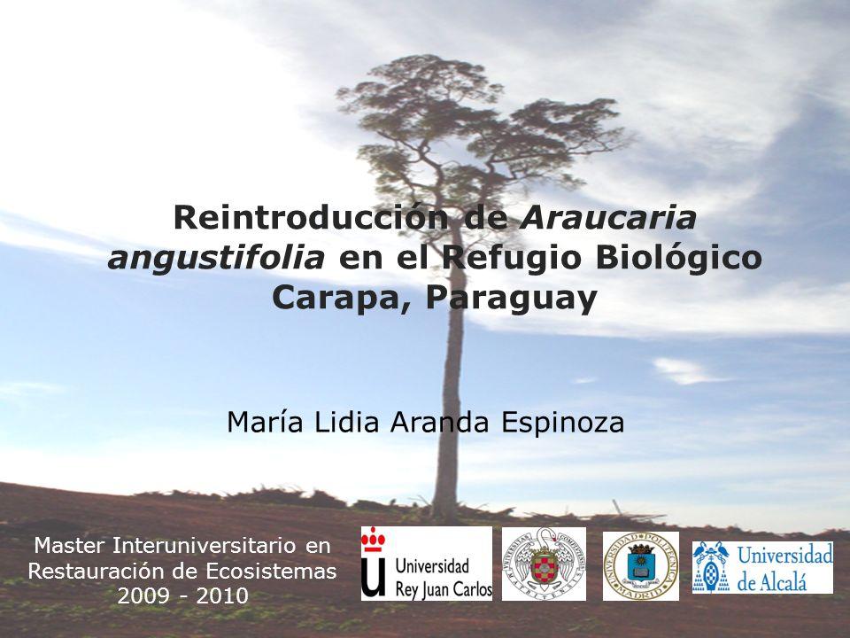 Master Interuniversitario en Restauración de Ecosistemas 2009 - 2010 Reintroducción de Araucaria angustifolia en el Refugio Biológico Carapa, Paraguay