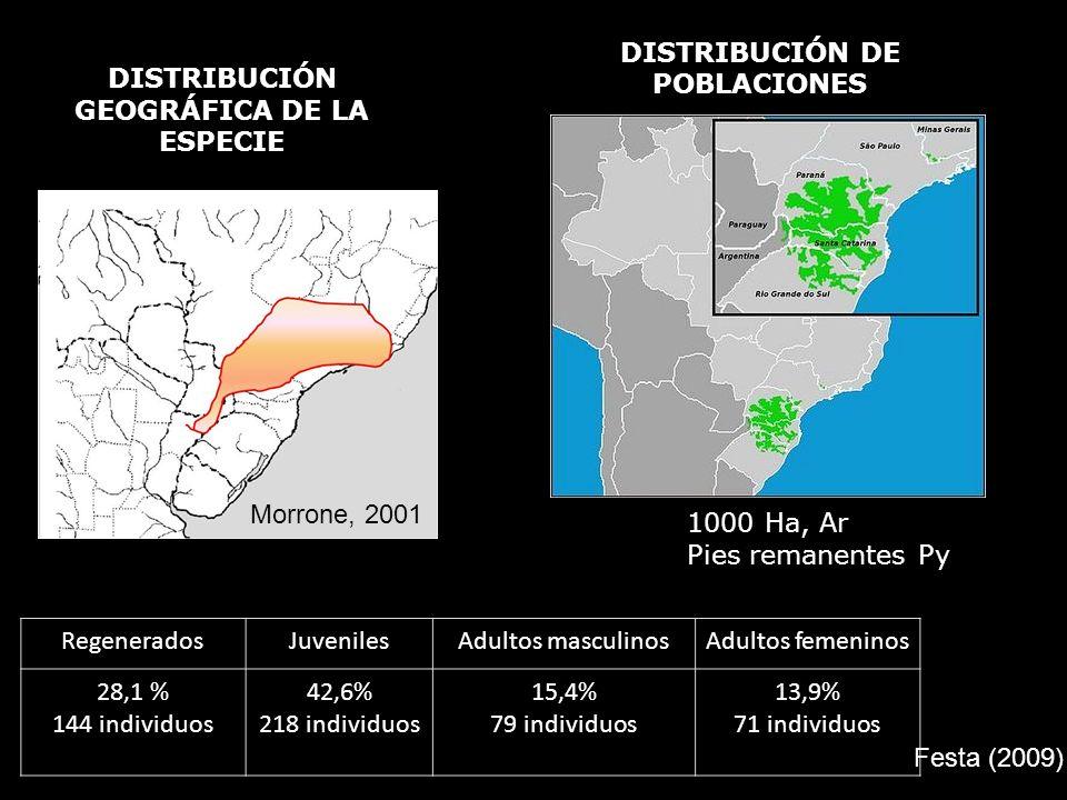 DISTRIBUCIÓN GEOGRÁFICA DE LA ESPECIE Morrone, 2001 DISTRIBUCIÓN DE POBLACIONES 1000 Ha, Ar Pies remanentes Py RegeneradosJuvenilesAdultos masculinosA