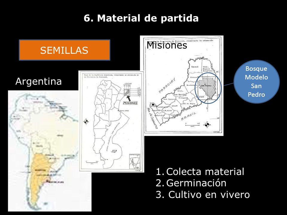 6. Material de partida Bosque Modelo San Pedro Argentina Misiones SEMILLAS 1.Colecta material 2.Germinación 3. Cultivo en vivero