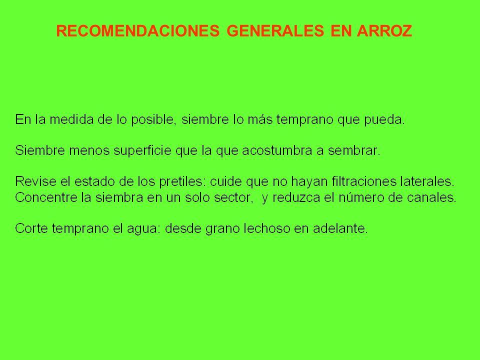 RECOMENDACIONES GENERALES EN ARROZ