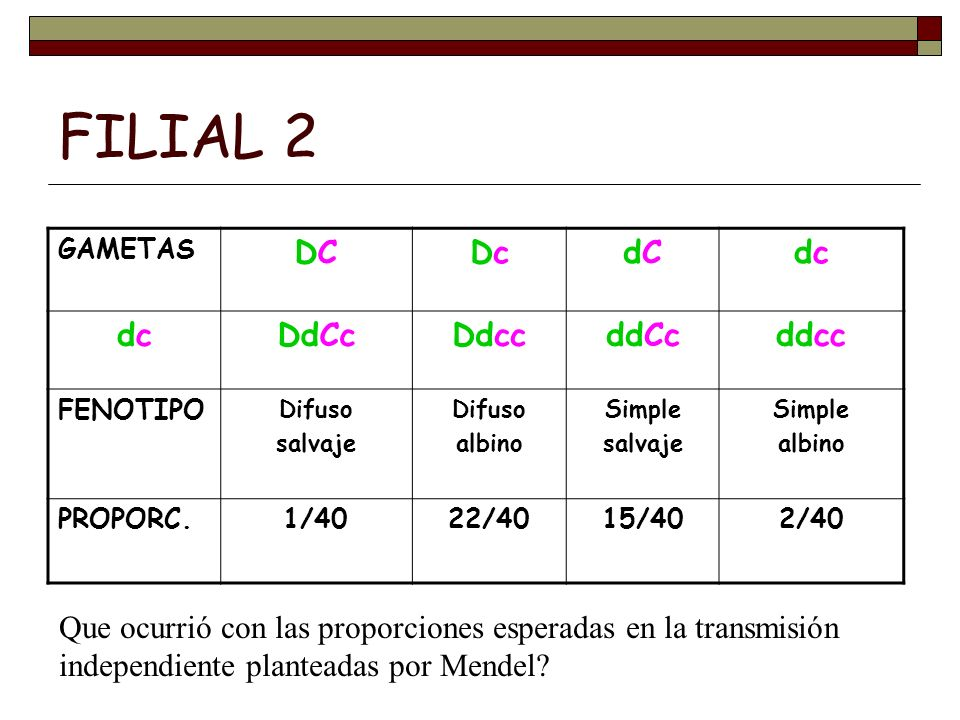 FILIAL 2 GAMETAS DCDCDcDcdCdCdcdc dcdcDdCcDdccddCcddcc FENOTIPO Difuso salvaje Difuso albino Simple salvaje Simple albino PROPORC.1/4022/4015/402/40 Q