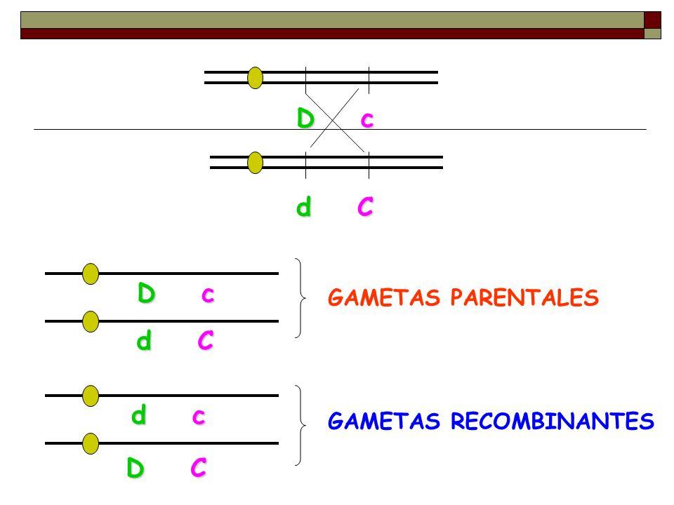 D c d C D c d C GAMETAS PARENTALES D C d c GAMETAS RECOMBINANTES