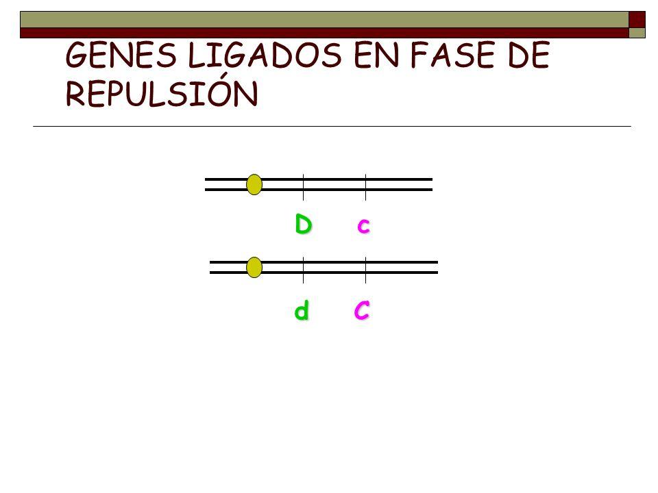 GENES LIGADOS EN FASE DE REPULSIÓN D c d C