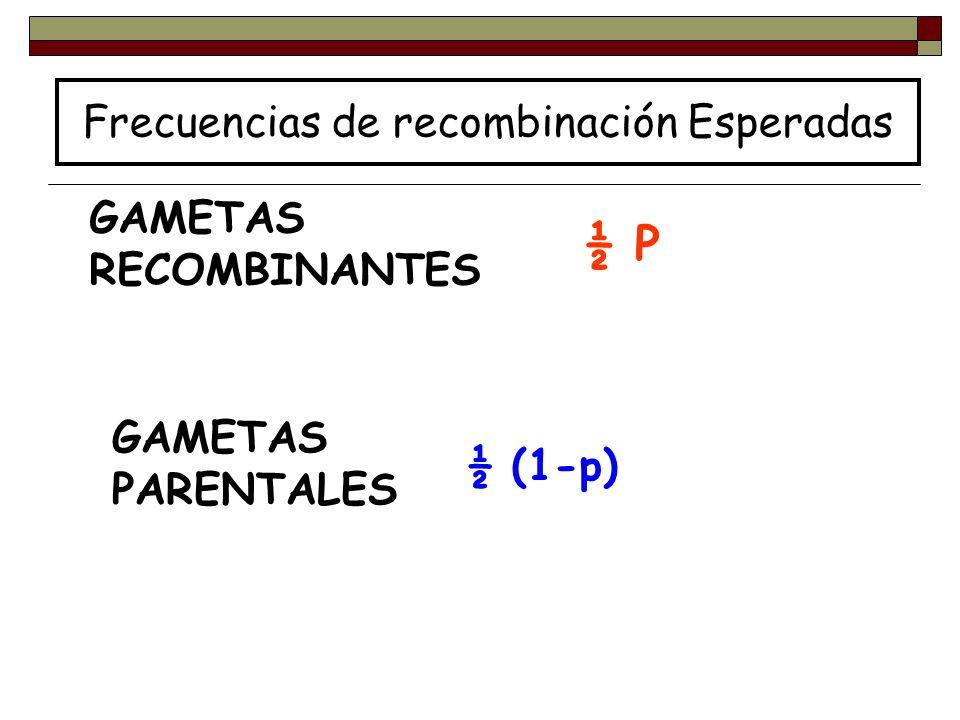 GAMETAS RECOMBINANTES GAMETAS PARENTALES ½ P ½ (1-p) Frecuencias de recombinación Esperadas
