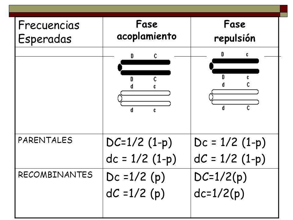 Frecuencias Esperadas Fase acoplamiento Fase repulsión PARENTALES DC=1/2 (1-p) dc = 1/2 (1-p) Dc = 1/2 (1-p) dC = 1/2 (1-p) RECOMBINANTES Dc =1/2 (p)