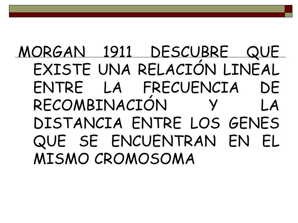 MORGAN 1911 DESCUBRE QUE EXISTE UNA RELACIÓN LINEAL ENTRE LA FRECUENCIA DE RECOMBINACIÓN Y LA DISTANCIA ENTRE LOS GENES QUE SE ENCUENTRAN EN EL MISMO