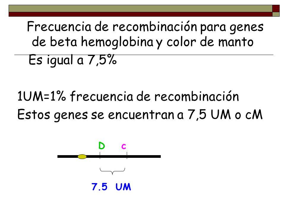 Frecuencia de recombinación para genes de beta hemoglobina y color de manto Es igual a 7,5% 1UM=1% frecuencia de recombinación Estos genes se encuentr