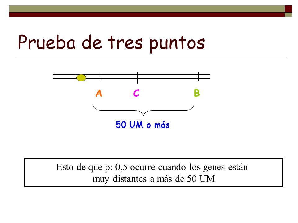 Prueba de tres puntos ABC 50 UM o más Esto de que p: 0,5 ocurre cuando los genes están muy distantes a más de 50 UM