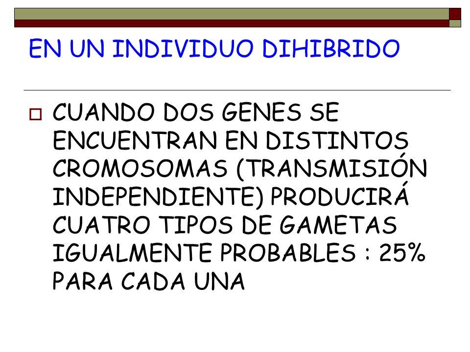 EN UN INDIVIDUO DIHIBRIDO CUANDO DOS GENES SE ENCUENTRAN EN DISTINTOS CROMOSOMAS (TRANSMISIÓN INDEPENDIENTE) PRODUCIRÁ CUATRO TIPOS DE GAMETAS IGUALME