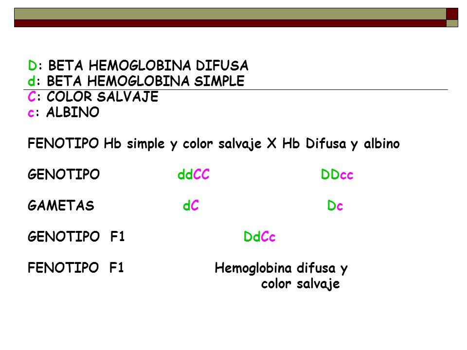 D: BETA HEMOGLOBINA DIFUSA d: BETA HEMOGLOBINA SIMPLE C: COLOR SALVAJE c: ALBINO FENOTIPO Hb simple y color salvaje X Hb Difusa y albino GENOTIPO ddCC