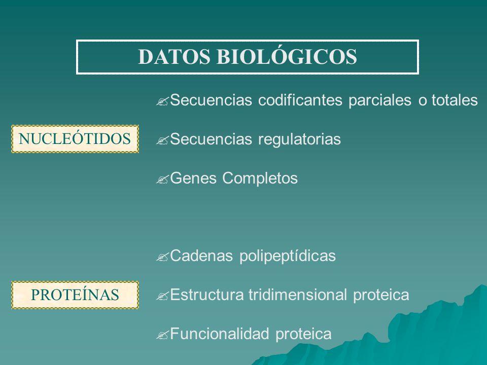 DATOS BIOLÓGICOS Secuencias codificantes parciales o totales Secuencias regulatorias Genes Completos Cadenas polipeptídicas Estructura tridimensional proteica Funcionalidad proteica NUCLEÓTIDOS PROTEÍNAS