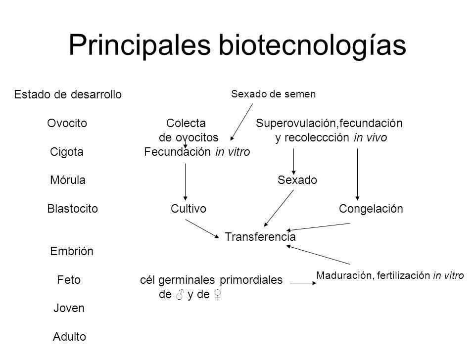 Principales biotecnologías Estado de desarrollo Ovocito Colecta Superovulación,fecundación de ovocitos y recoleccción in vivo Cigota Fecundación in vitro Mórula Sexado Blastocito Cultivo Congelación Transferencia Embrión Feto cél germinales primordiales de y de Joven Adulto Maduración, fertilización in vitro Sexado de semen