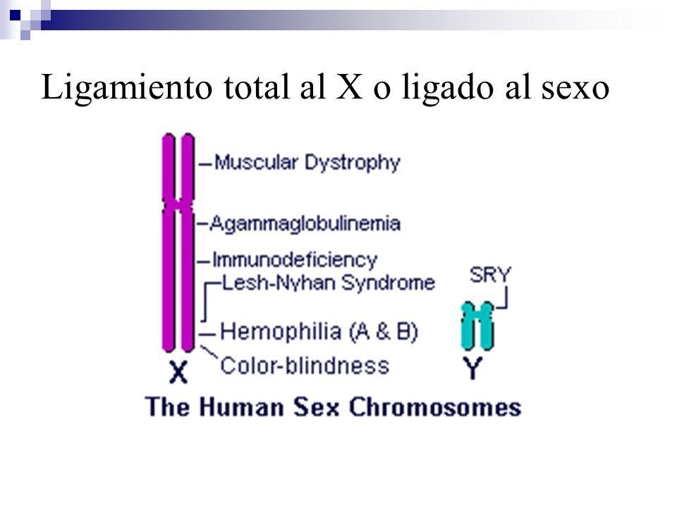 Ligamiento total al X o ligado al sexo