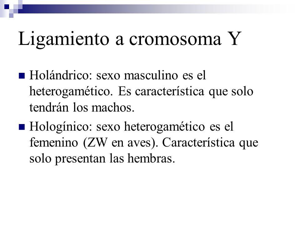 Ligamiento a cromosoma Y Holándrico: sexo masculino es el heterogamético. Es característica que solo tendrán los machos. Hologínico: sexo heterogaméti